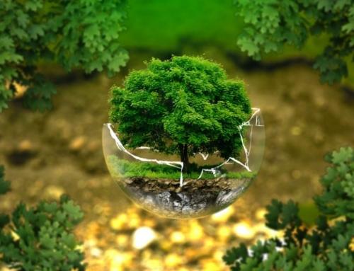 Consigli su come vivere in modo ecologista iniziando dal bagno